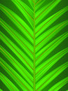 Palm Leaf Closeup Royalty Free Stock Photo - 9921575