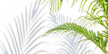 Palm Leaves And Shadows On A White Wall Royalty Free Stock Photo - 99260575