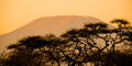 Evening Silhouette Of Mount Kilimanjaro Hidden Behind Trees, Tanzania, Africa Stock Photography - 99278092