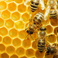 Bees On Honeycells Royalty Free Stock Image - 9945186