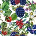 Forest Berries Seamless Pattern. Watercolor Seamless Pattern Stock Photography - 99433112