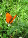 Orange Butterfly Stock Image - 9950801