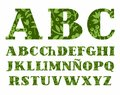Spanish Alphabet, Berries And Herbs, Green, Vector. Stock Photography - 99537662