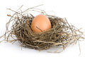Egg In Nest Royalty Free Stock Images - 9975929