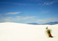 A Yucca In White Sands Royalty Free Stock Images - 9979829