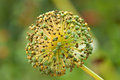Gone To Seed Stock Photos - 9983423