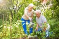 Senior Couple Gardening Royalty Free Stock Photos - 99824258