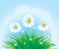 Decorative Card With Daisy Stock Images - 9994274