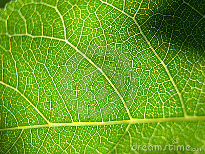 Green leaf closeup 2