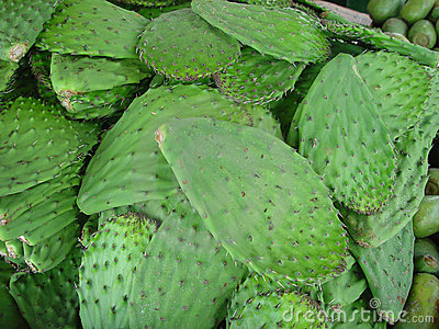 Cactus Leaves