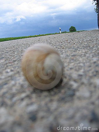 Snail on the road