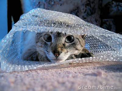 Cat in Bubble Wrap