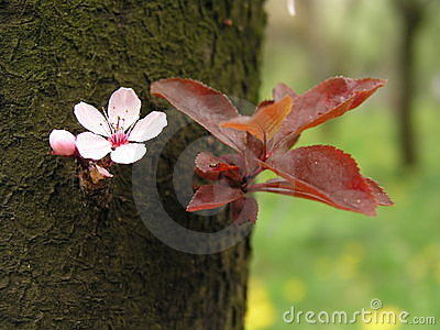 Spring flower on tree bark