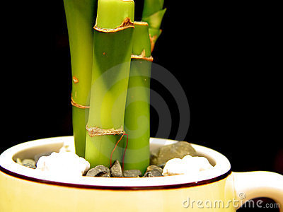Bamboo In Cup
