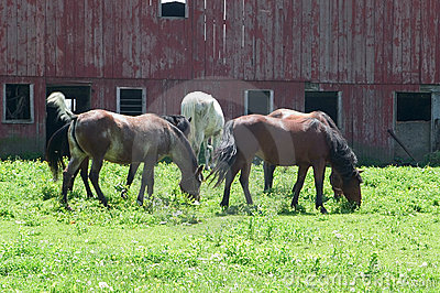 Herd of horses in pasture