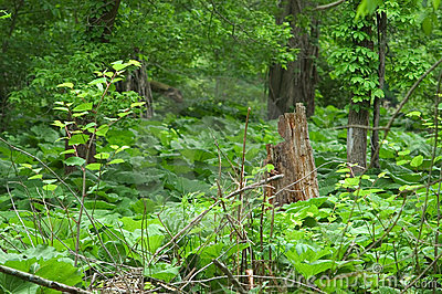 Tree stump surrounded be vegetation