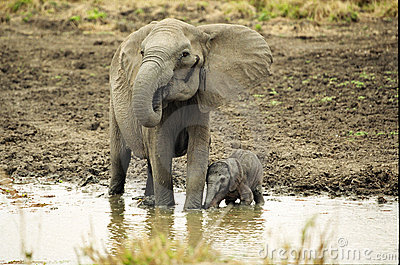 Elephant and Newborn