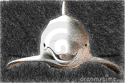 A dolphin sketch
