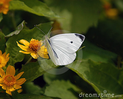 Butterfly No1