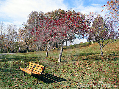 red leafed tree with park bench