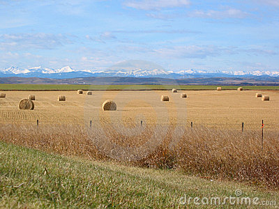 Mountains, Foothills, and Bales