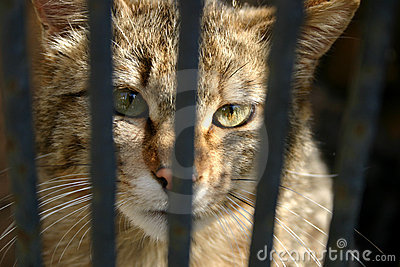 Wild cat in the cage