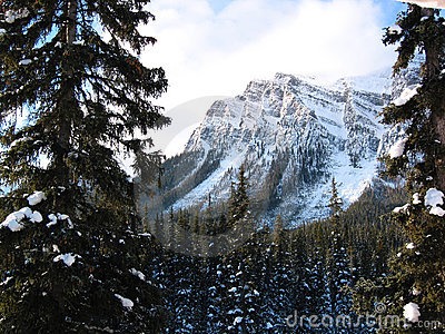 Majestic mountain with a snowy forest