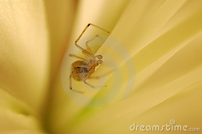 Spider in a flower