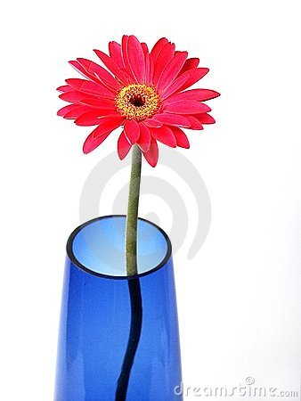 Gerber in blue vase
