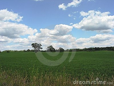 Field in Michigan – 1