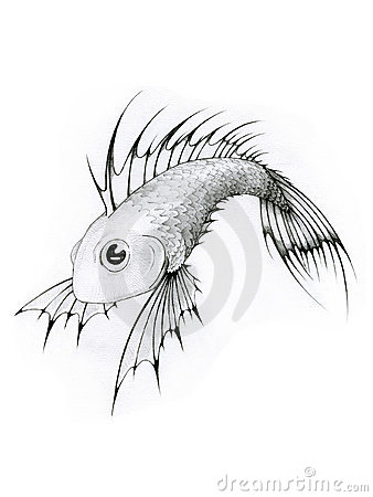 Black and white tropical fish