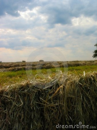 Field of Hay - 1