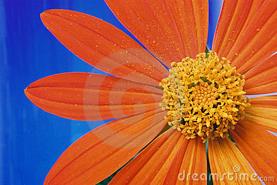 Flower and Orange Petals