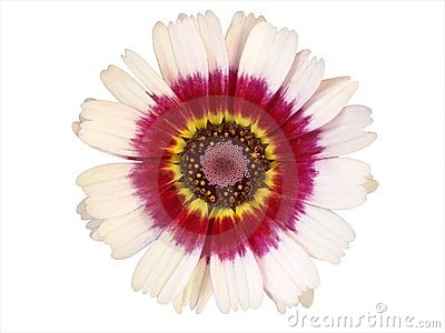 Design Elements: Colorful Flower Head