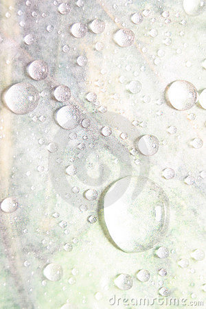 Water Drops on Light Background
