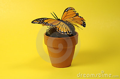Pot With Butterfly