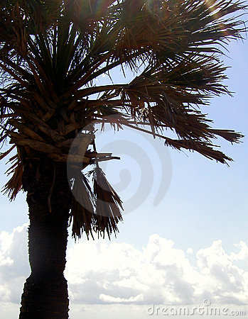 Cropped Palm