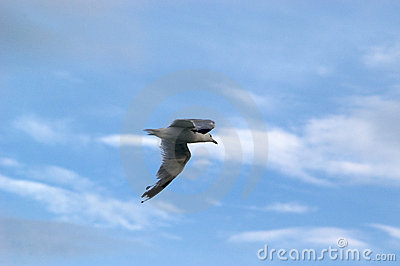 Gull's Flight