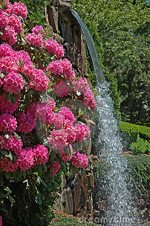 Park Flowers & Waterfall