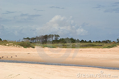 Beach with trees and Tidal Stream