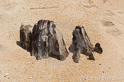 Stump on Beach