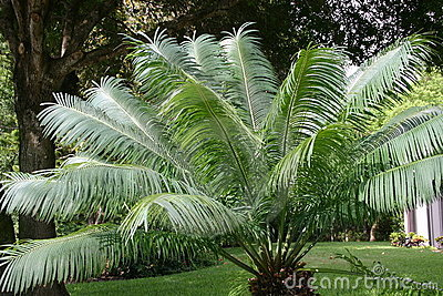 Swaying Palm Leaves
