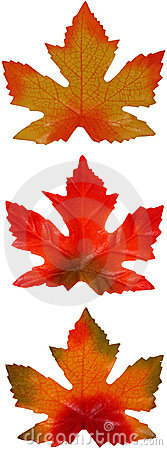 Maple Leaf Trio
