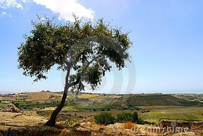 Tree on hill top