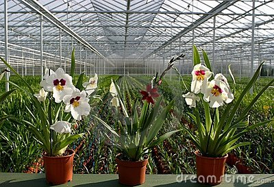 plant Nursery-orchids