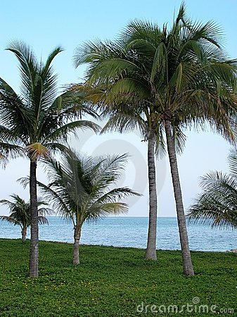 In the Tropics: Palms