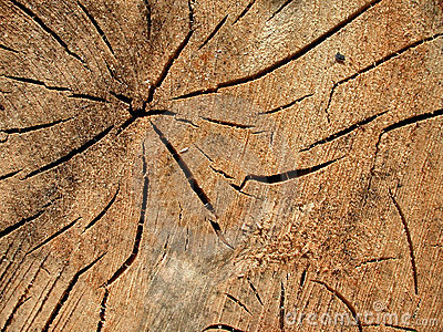 Old Wood Grain Cracks Texture
