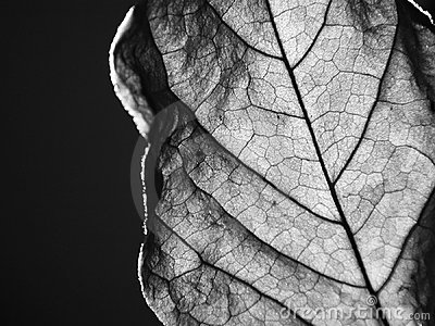 Dried leaf close-up