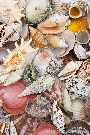 Shell background 3
