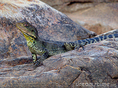 EasternWater Dragon